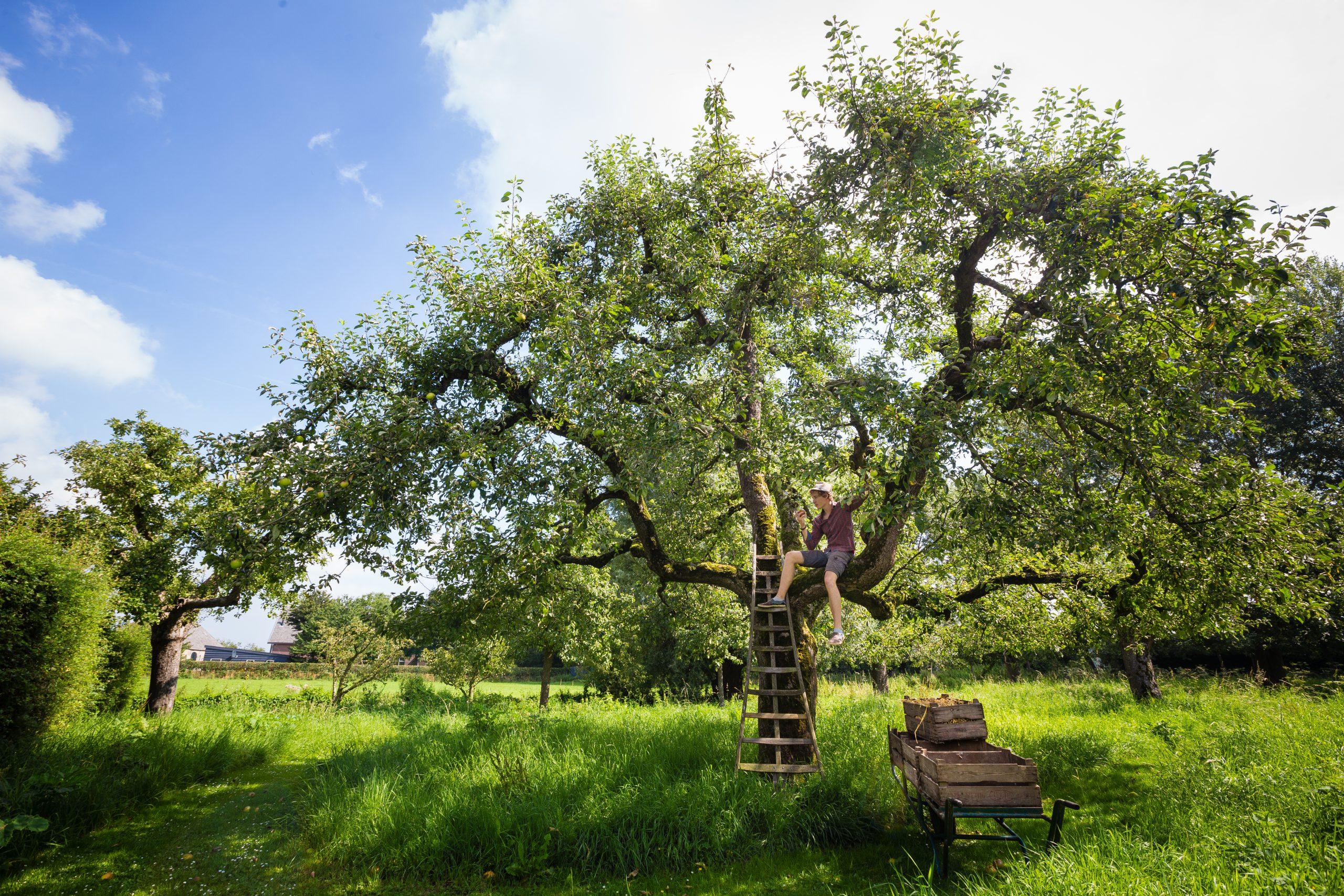 jongen in boom bij logement de appelgaard